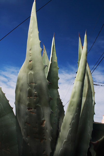 Beauty Dish and Agave Plants, Hayden, Arizona