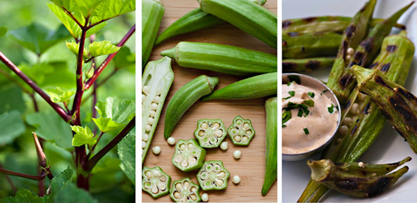 farmtotableokra-for-LE