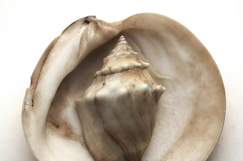 Shell in shell. Texture and color, light and shadow.