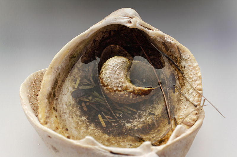 Shell filled with irrigation water