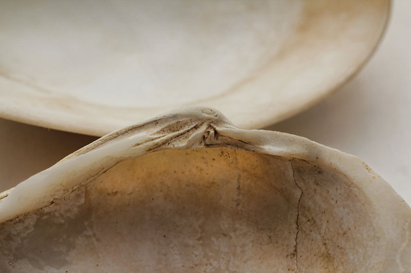 Detail of two shells.