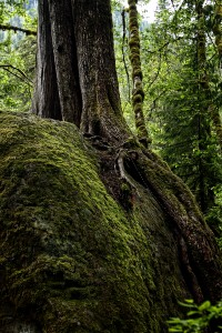 Rock and Tree: Washington State
