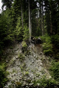 Erosion and Tree Roots, Cascades: Washington State
