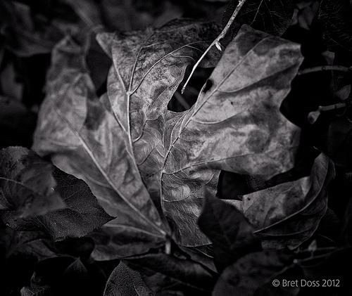 "Bret Doss's ""Fallen Leaf"" Series"