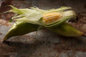 corn-164