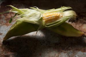 corn-167