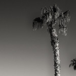 Palm trees are the only thing that breaks the smoothness of the sky
