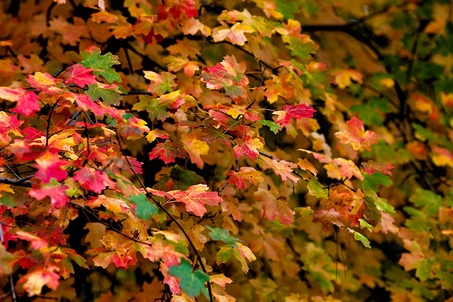 color-leaves-2b