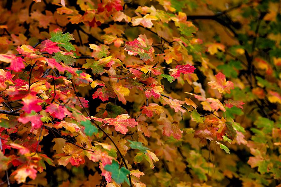 color-leaves-2b