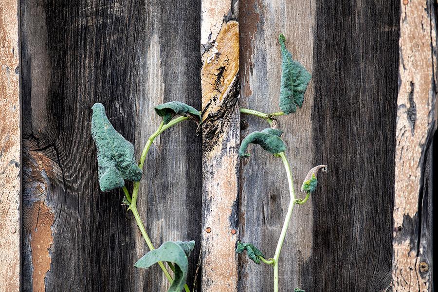 looped-plantsb