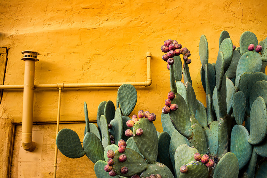 steampunk-cactusB