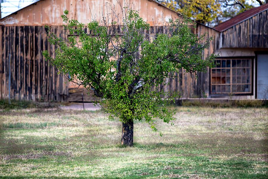 stunted-treeb