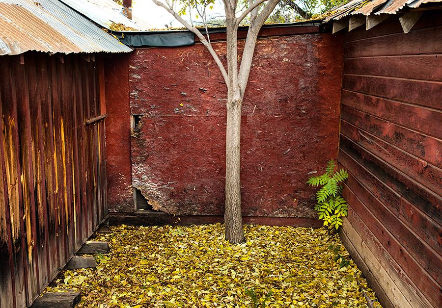 tree-red-wallb
