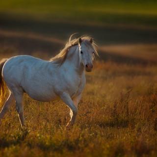 White-horse_0570